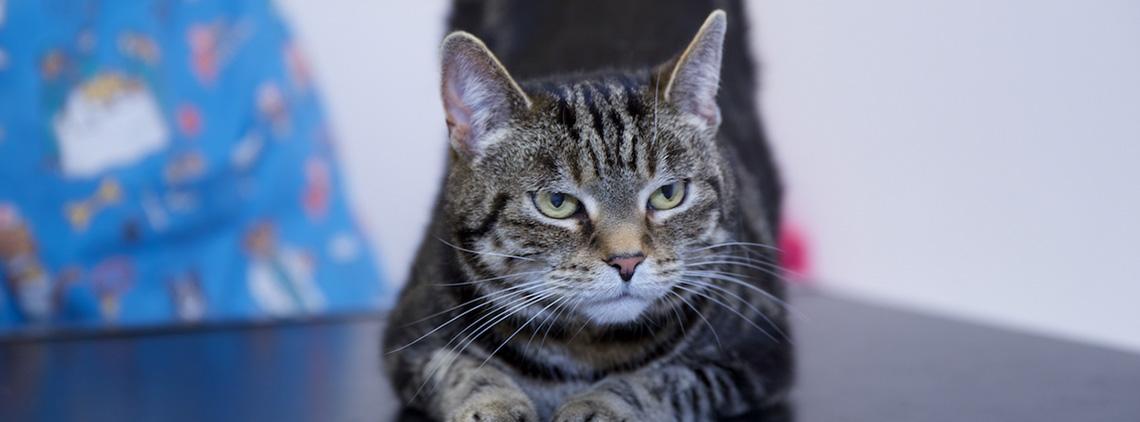 Feline Behaviour Consultations