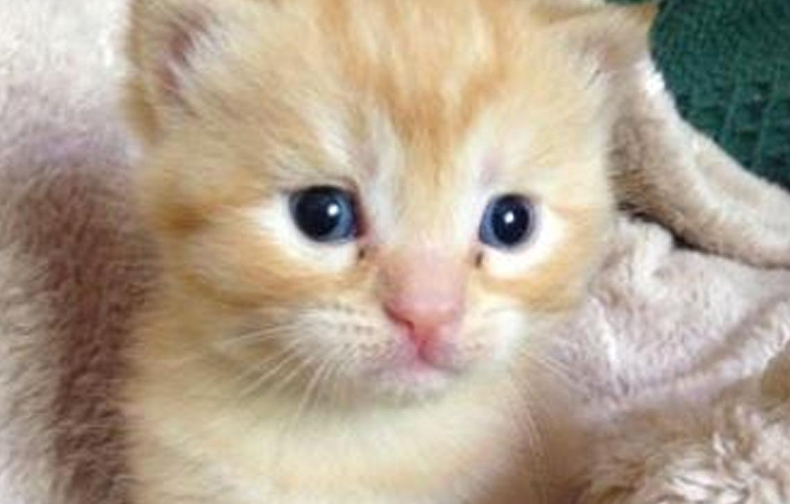 Izzy's kittens
