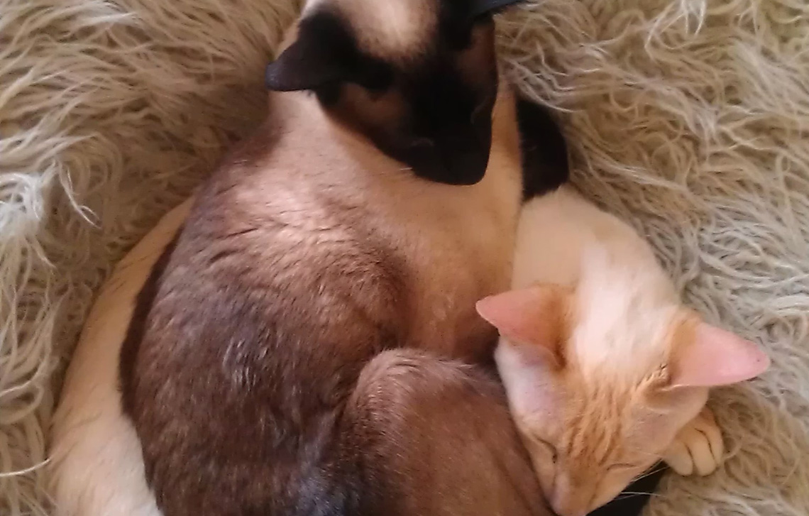 Chicken & Ping all cuddled up
