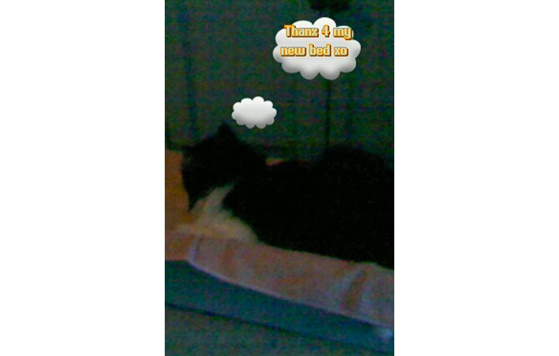 Kat Kat