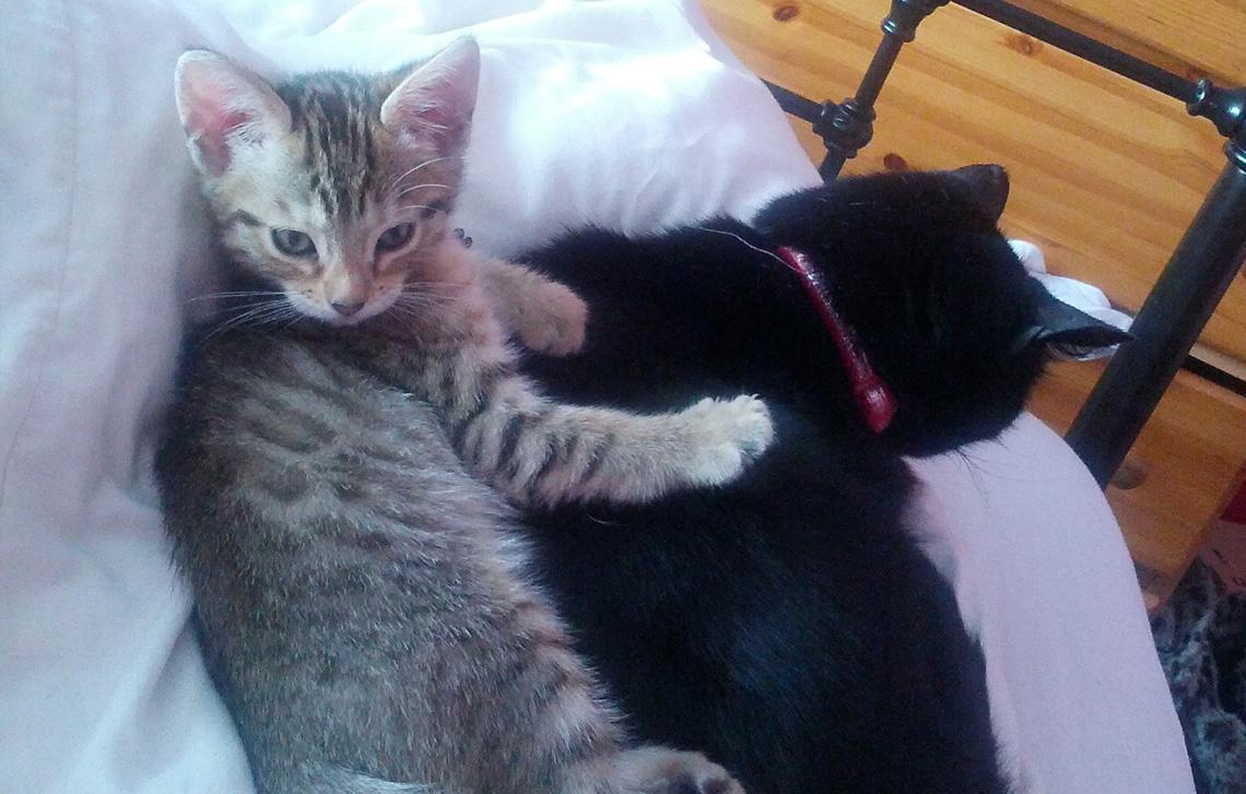Elly, Saffy & Betty