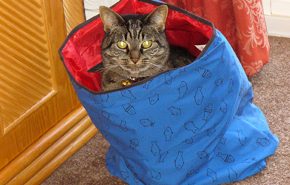 Waffles Chapman – a well travelled cat!