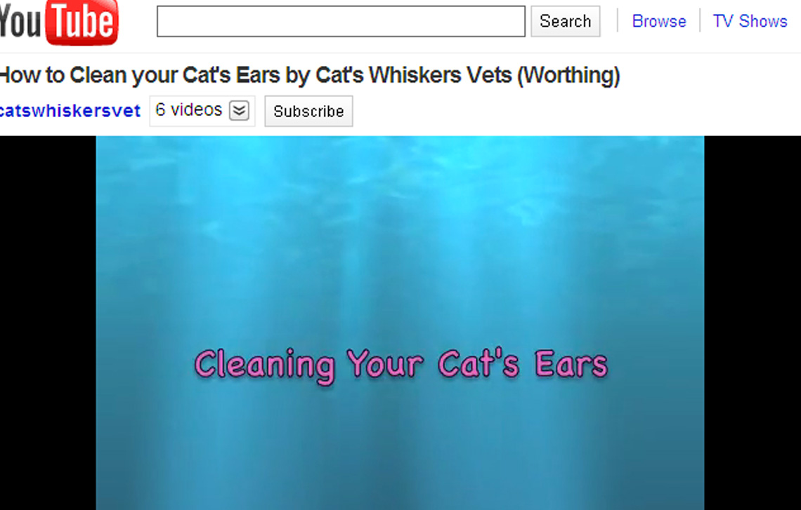 Cat Care Videos – Cat's Whiskers on You Tube