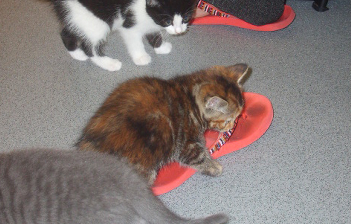 Tinks P and her kittens