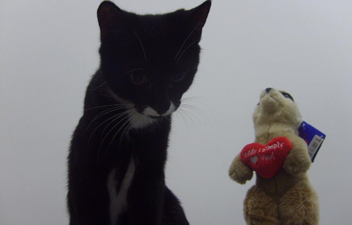 Dave Cat and his meerkat