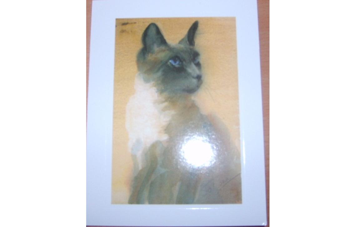 Cornelius the siamese cat