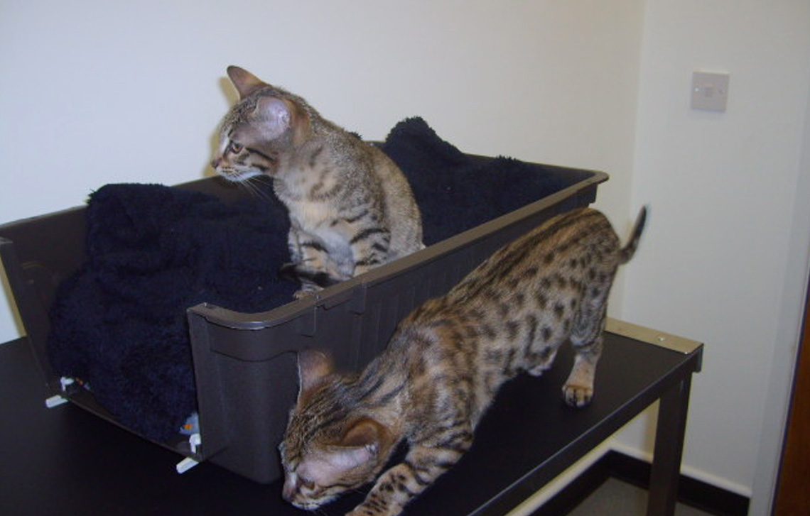 Freya and Keiko love the fish tank