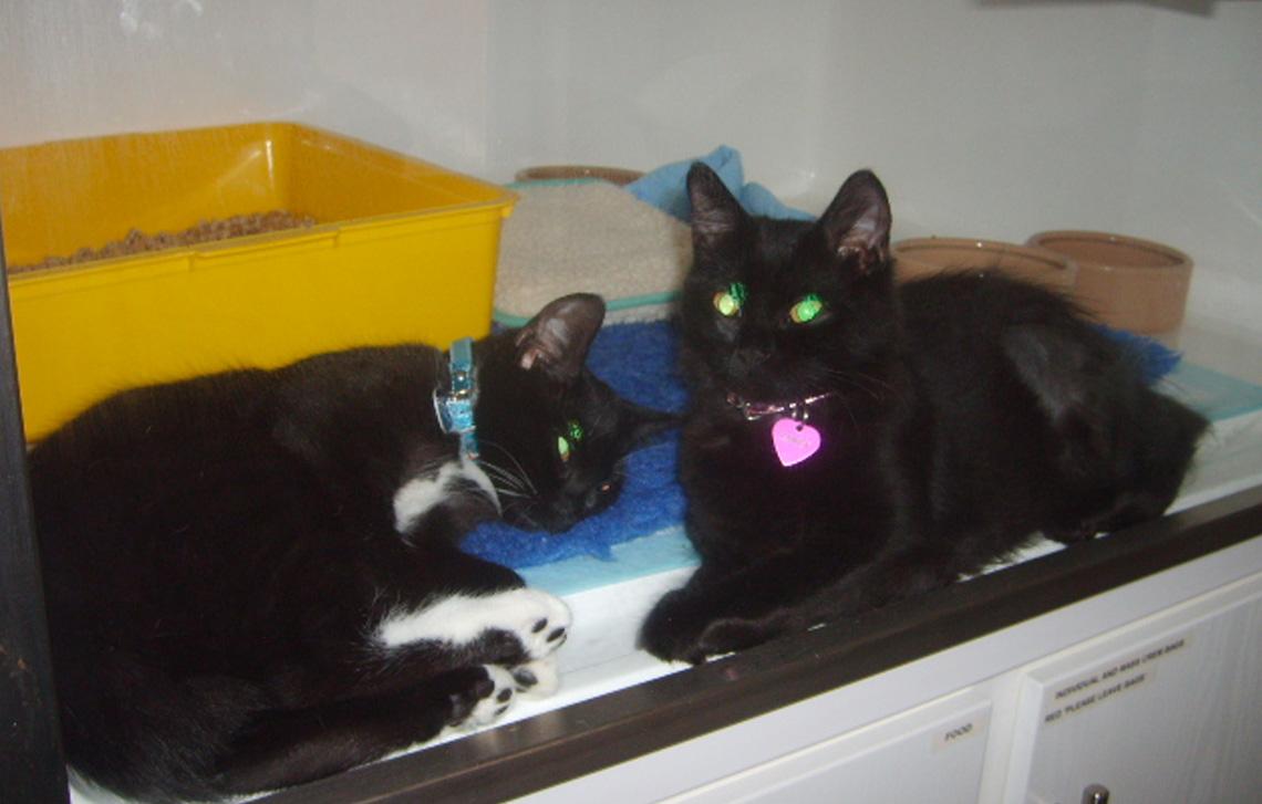 Janet and Mittens Berwick