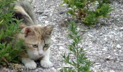 CAT HUNTING ON GRAVEL