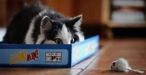 Territorial Cat New Kitten