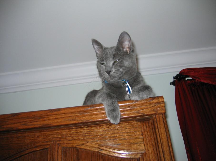 CAT ON TOP OF WARDROBE