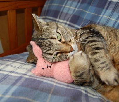 CAT & TOY