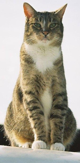 PROUD CAT i