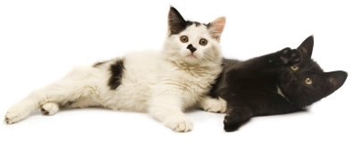 TWO CATS i