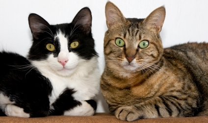 TWO CATS ii