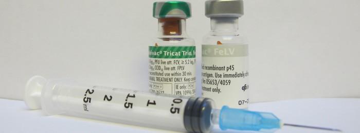 cat-vaccines-700x260