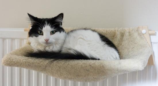 senior-cat-bed