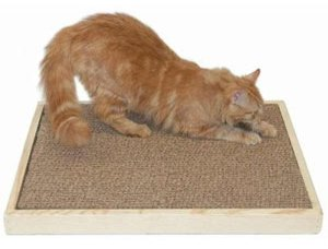senior-cat-scratcher