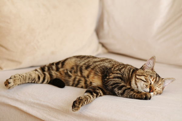 cat-on-sofa2