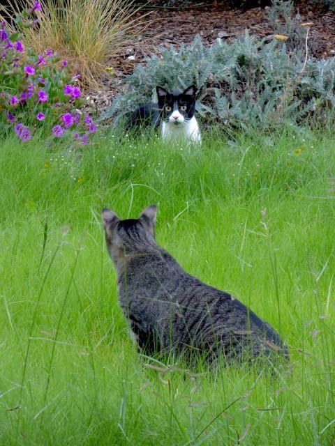 cat-staring-in-garden