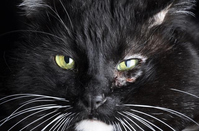 cat-with-injured-eye