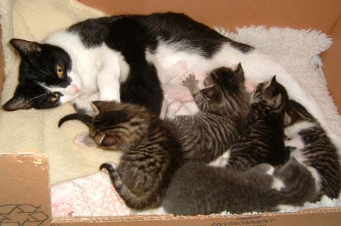 kitten-litter-2