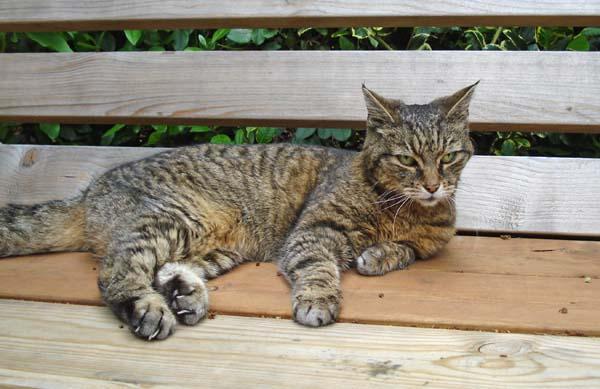 senior_cat_sm