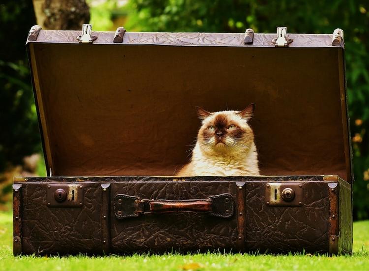 Catteries vs Cat Sitter