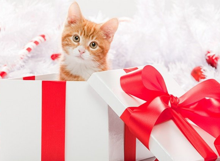 Animals as Christmas Presents