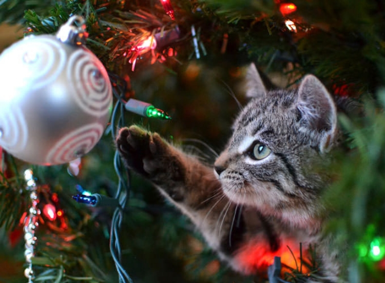Christmas Decorations and Keeping Your Cat Safe