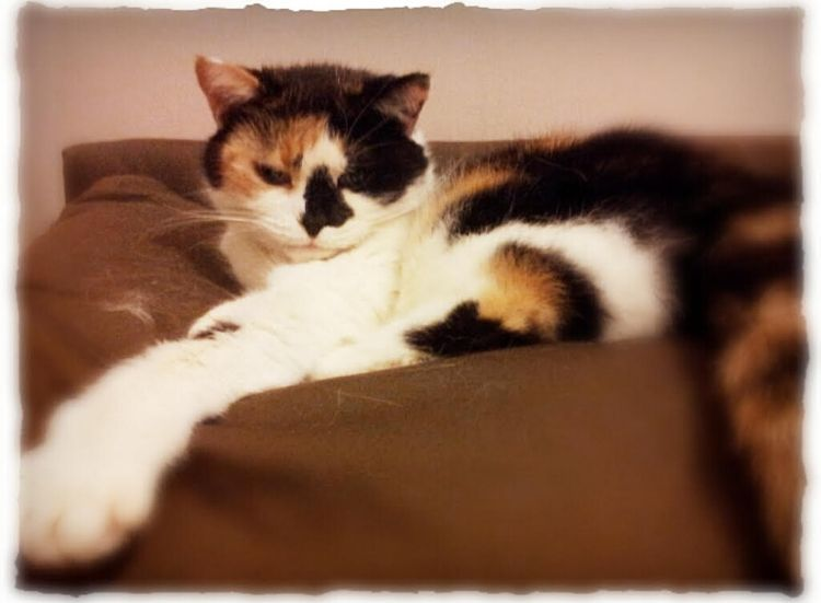 In Memory of a Special Cat – Pixie