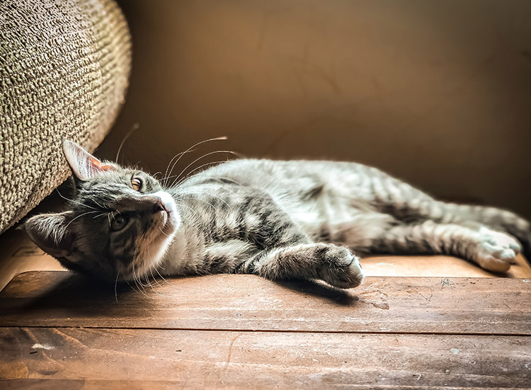 My cat already has a health condition, can they be insured?