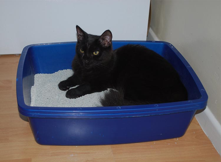 Switching from outdoor to indoor - litter tray training