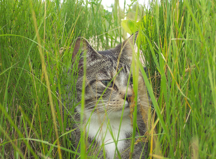 Grass and Cats